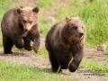 björn10