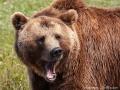 björn12