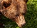 björn15
