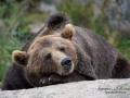 björn2