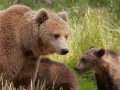 björn26