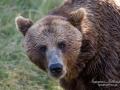 björn3