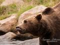 björn8