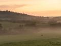 roe_deer_jordbrukslandskap_radjur_dimma_ipnaturfoto_se_rd259