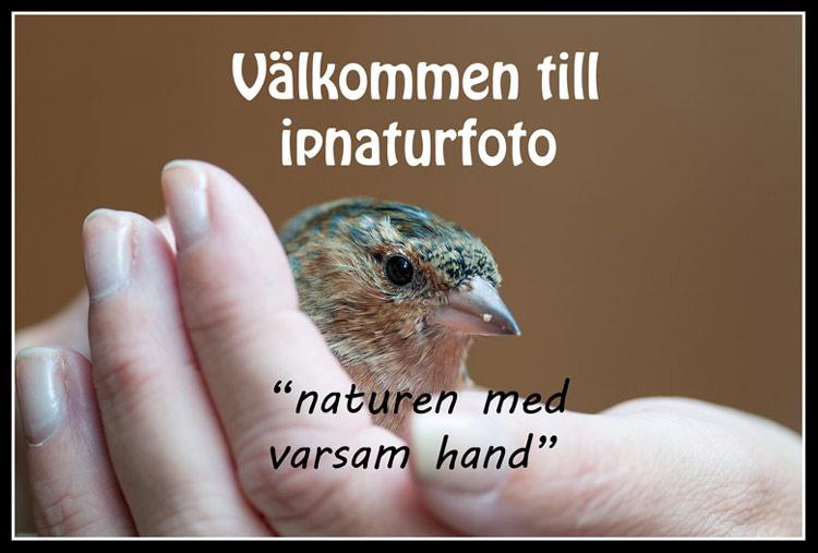 Naturen med varsam hand,
