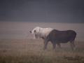 moose_algjakt_leucism_sagoalg_spiritmoose_naturfoto_natur_naturskyddsforeningen_ipnaturfoto_vitalg_va305