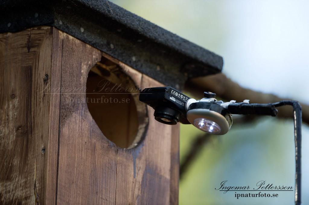Ugglespöt med tillhörande kamera tittar in i en kattuggleholk.