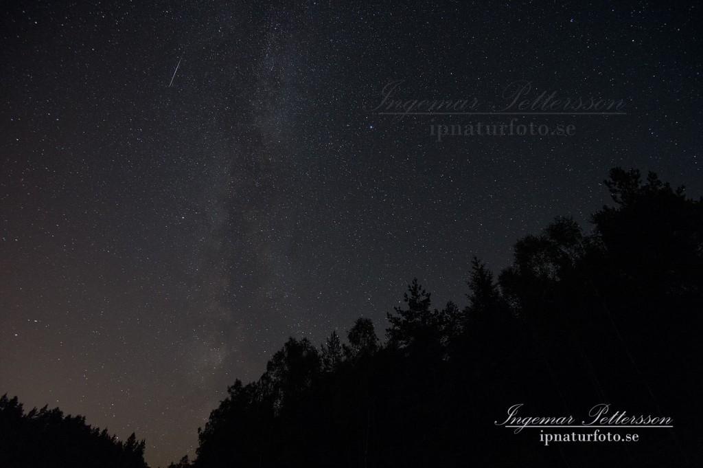Fantastisk natt på Herrestadsfjället där både stjärnfall och hoande ugglor löste av varandra.