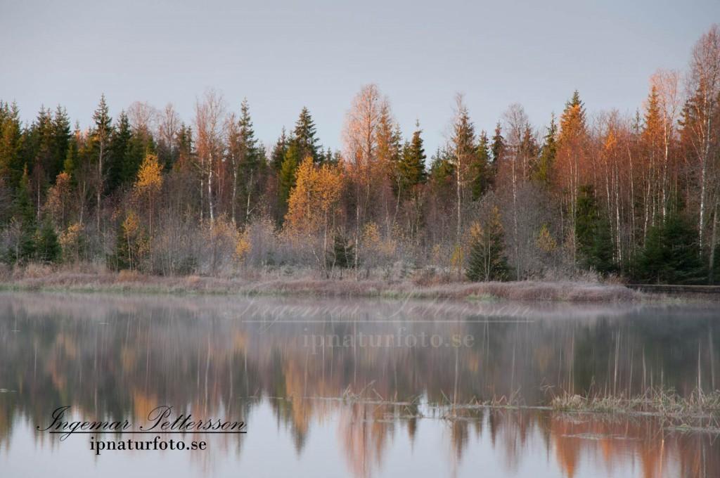 Tidig höstmorgon vid dammen.