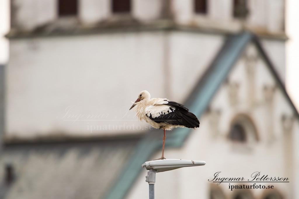Storken står på lyktstolpen och vilar med ett ben uppdraget.