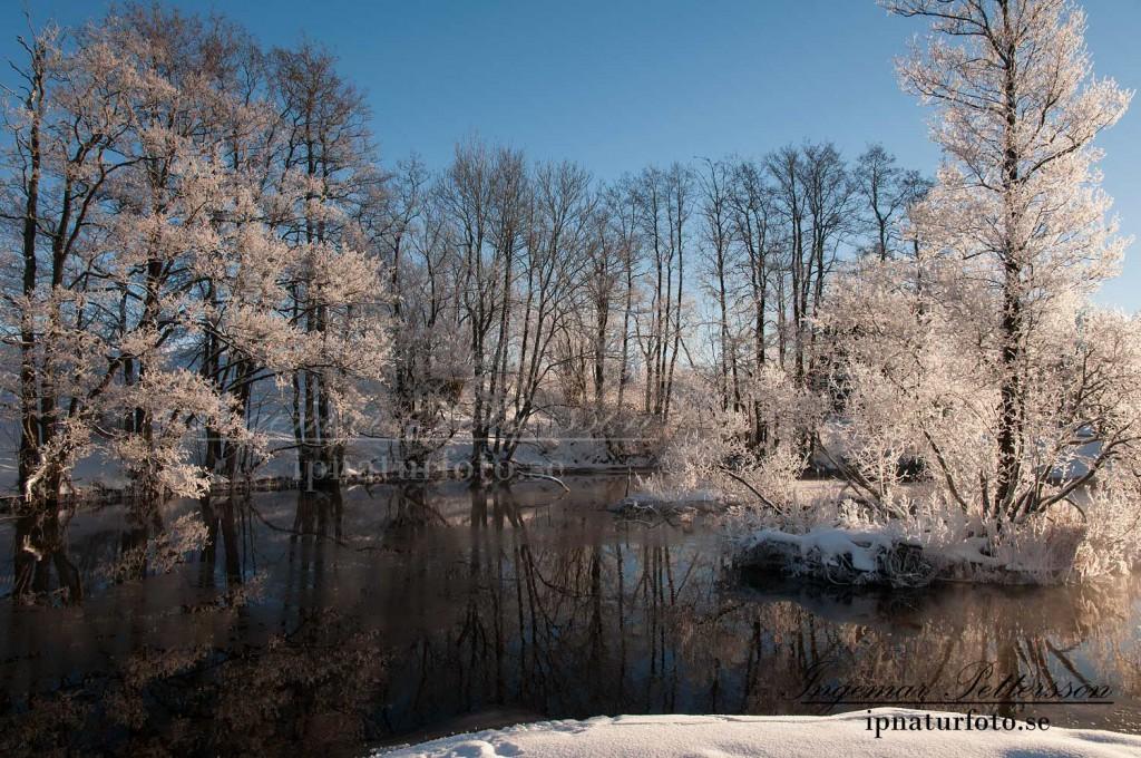 Magiskt vinterlandskap vid å kröken.