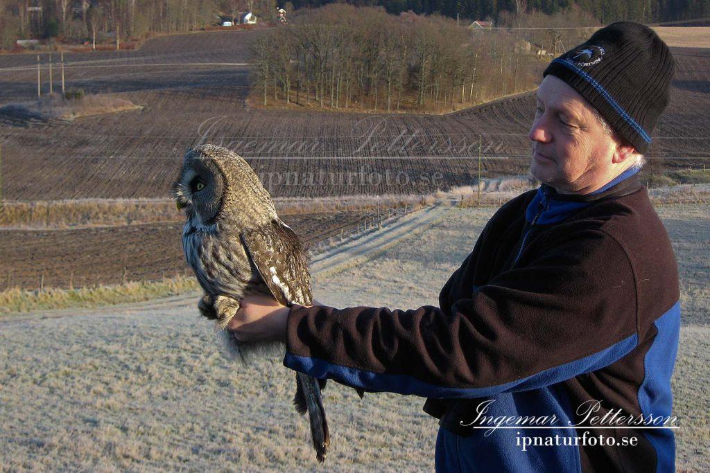 Tommy Järås från fågelcentralen visar upp lappugglan innan den återfår sin frihet.