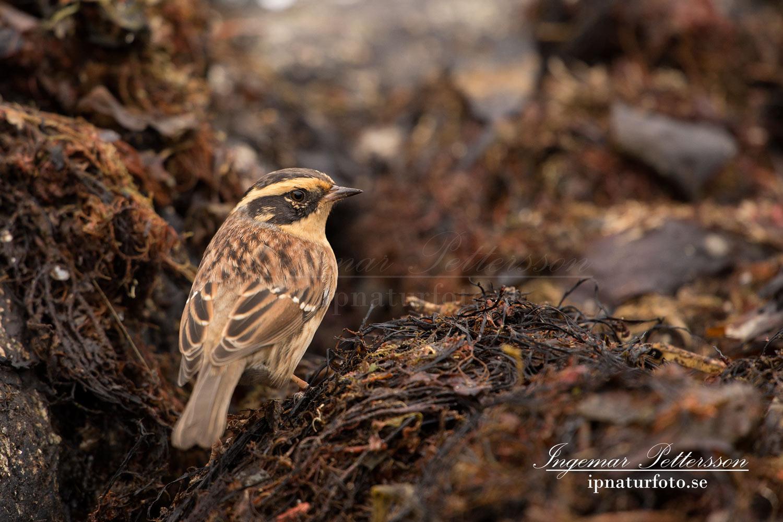 fotografera fåglar och vilda djur