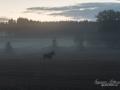 alg_moose_dimma_ipnaturfoto_aker_jordbrukslandskap_alg100