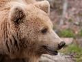 björn11
