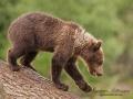 björn13