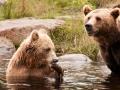björn16