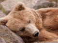 björn17