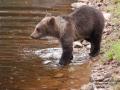 björn18