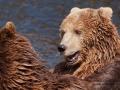 björn19