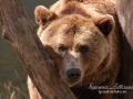 björn4