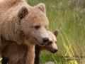 björn5