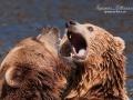 björn6