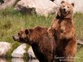 björn7