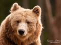 björn9