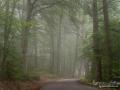 torreby_bokskog_beech_woods_dimma_ls166