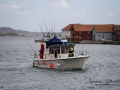 havsfiske_ipnaturfoto_se_fis68