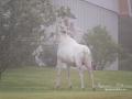 vit_alg_ipnaturfoto_se_varmland_white_moose_va258